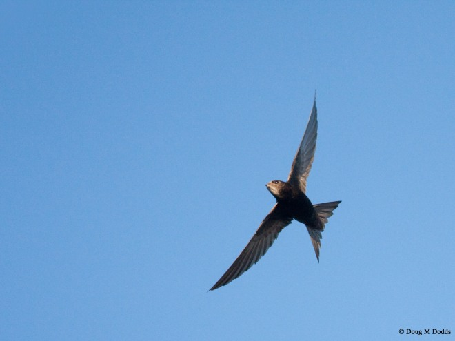 swift for swift conservation-14 copie